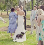 Pet Wedding Mishaps